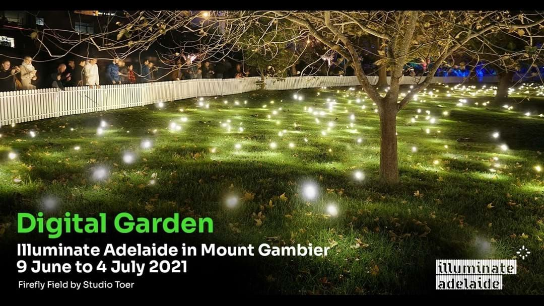Article heading image for The 'Digital Garden' will Illuminate The Cave Garden