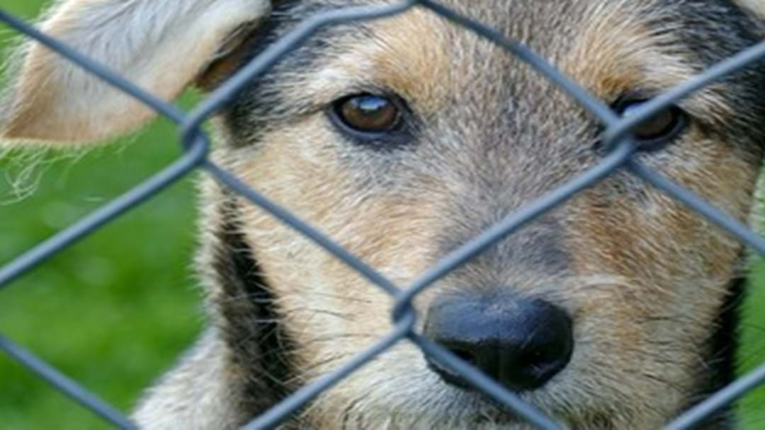 Article heading image for Farm Animals Being Targeted by Domestic Dogs