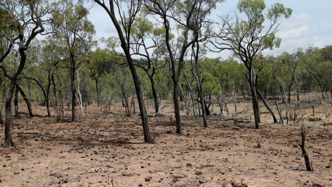 Article heading image for Local Farmer Predicts Drought For Far North Queensland