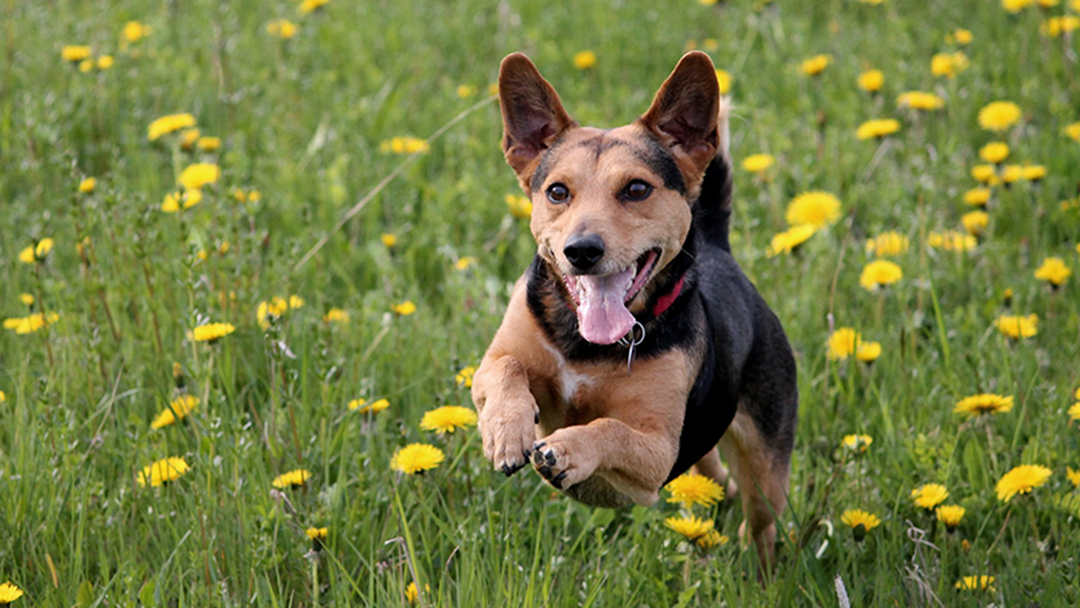 Article heading image for There Is Now A Service That Lets You Borrow Dogs