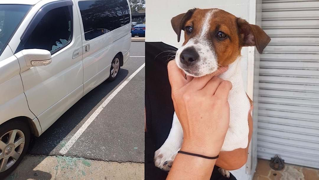 Article heading image for ANIMAL CRUELTY CHARGE: Man 'Forgot' Dog Was In Car in Coffs Harbour CBD