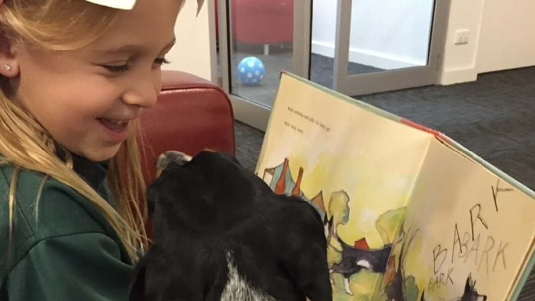 Article heading image for Library Dog Offers Special Service and Smiles to the Community