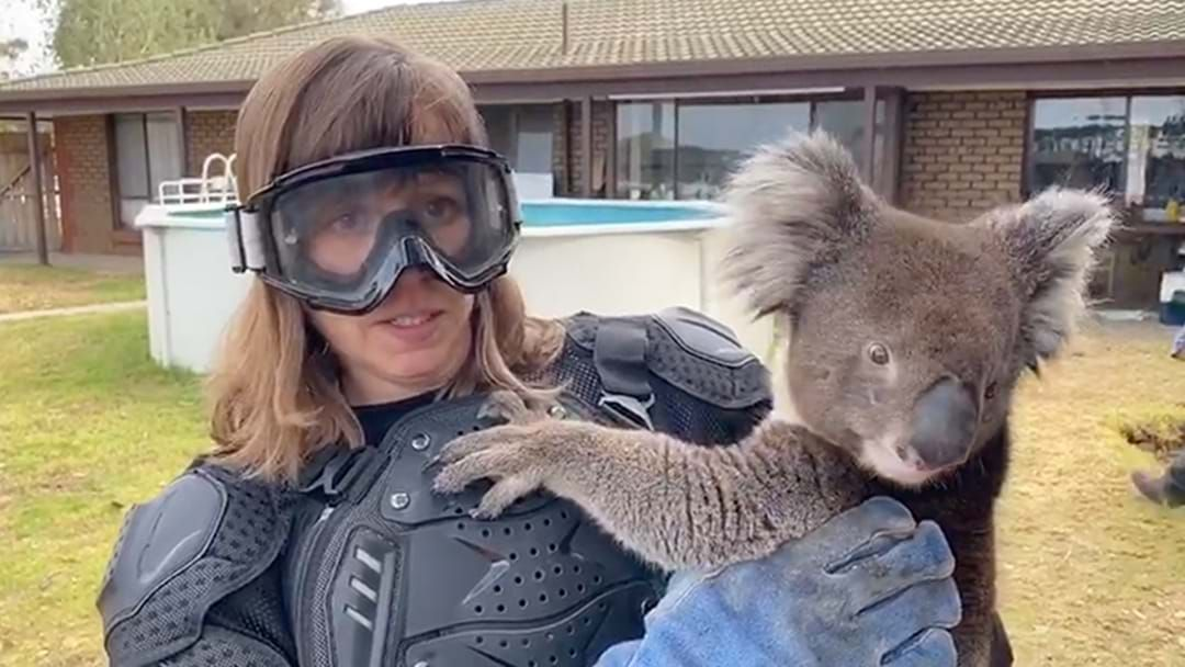 Kangaroo Island Wildlife Park tricks Scottish reporter into handling risky 'drop bear'