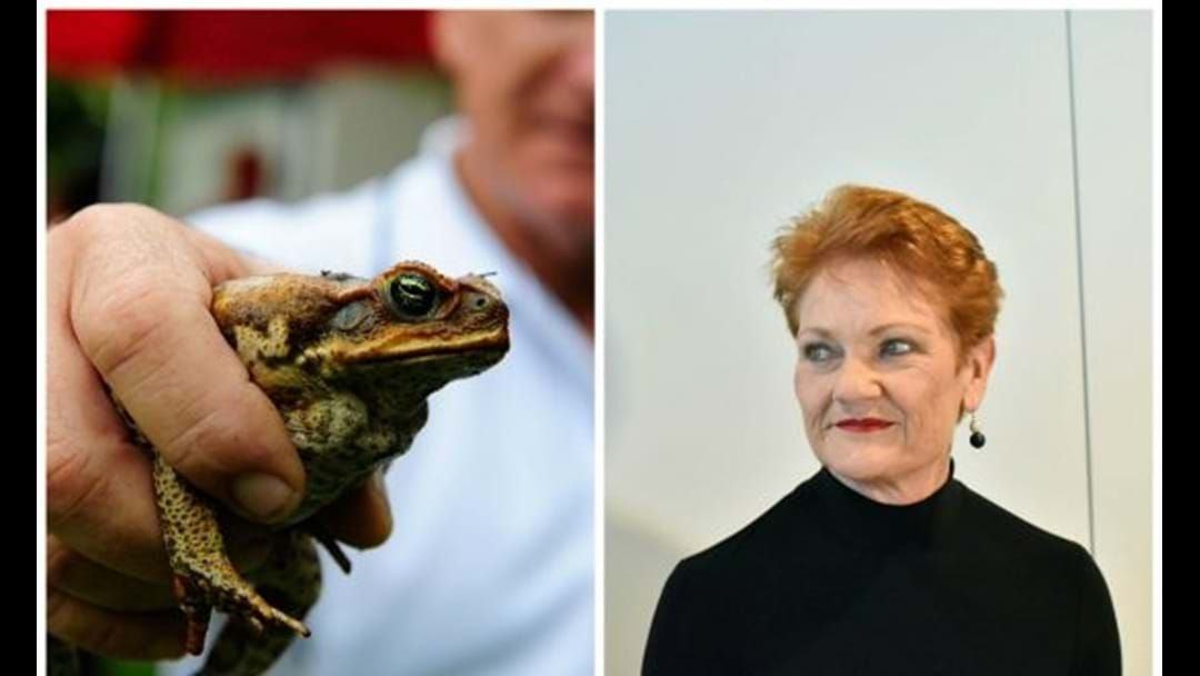 Article heading image for PAULINE HANSON ENCOURAGES CANETOAD CASH FOR MACKAY REGION