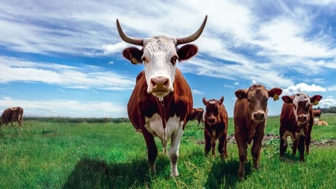 Article heading image for Western Australian Farmers Set To Capitalise From Free-Trade Agreement