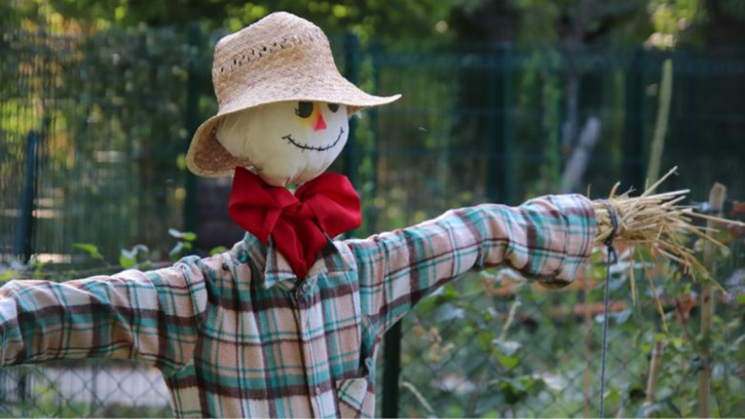 Article heading image for The CBR Scarecrow competition is now on!