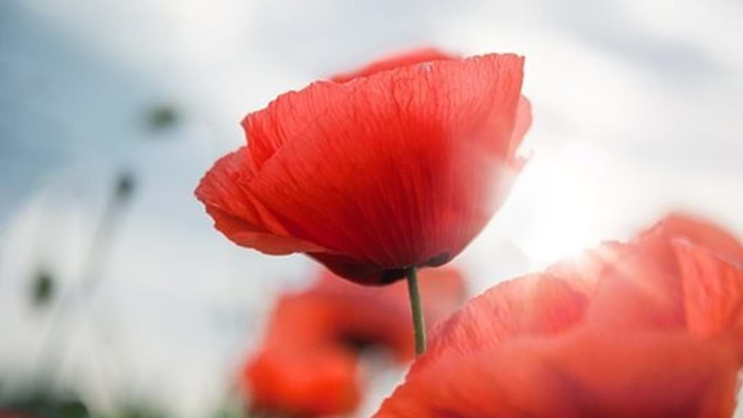 Article heading image for Riverina to mark Remembrance Day on Sunday