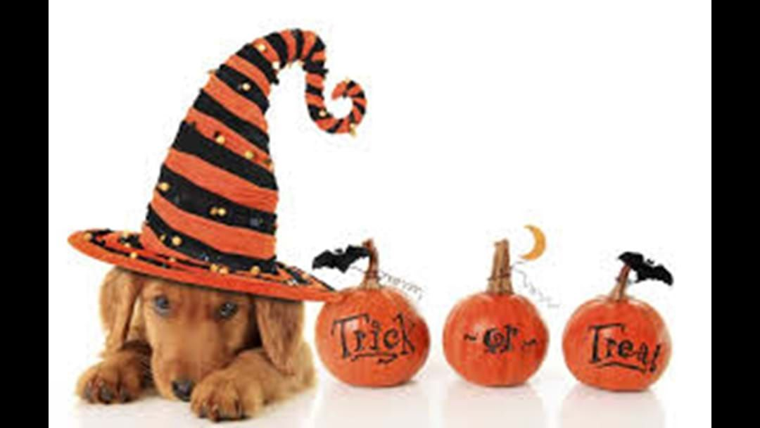 Article heading image for Dogs Day Out: Howloween