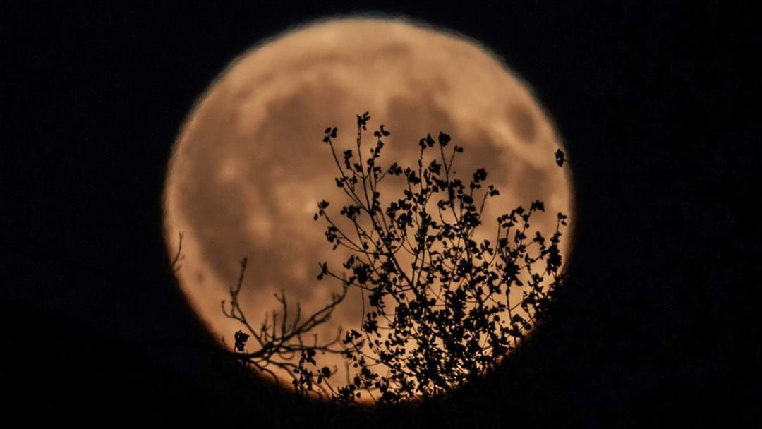 Article heading image for A Rare Harvest Moon Will Be Glowing Orange In Our Skies Tonight