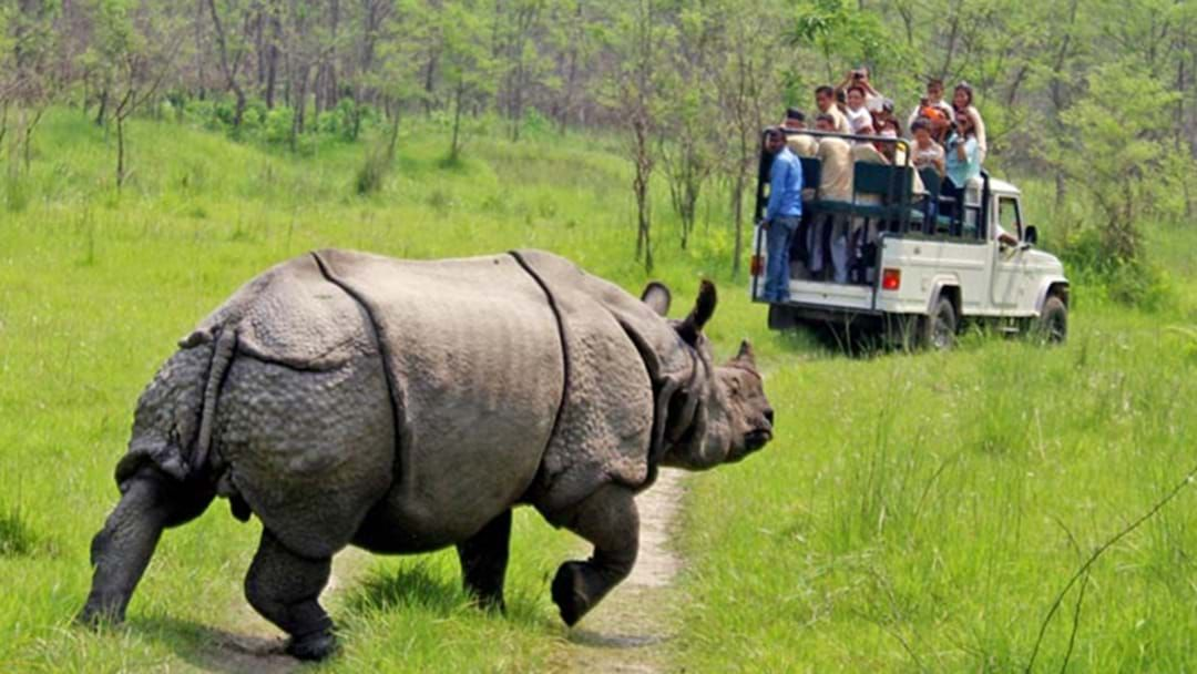 Article heading image for Australian Teenager In Critical Condition After Rhino Attack In Nepal
