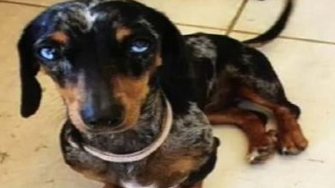 Article heading image for Winnie Has Been Stolen  - Police Need Your Help to Return Her To Her Owners