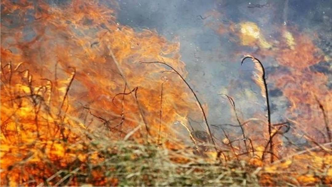 Article heading image for Fire Scares Grip South-East Queensland