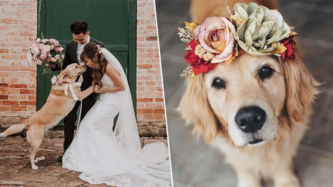 Article heading image for This Adorable Wedding Service Exists & It Pampers Your Pet For The Paw-Fect Day