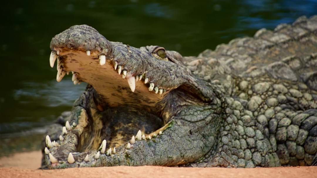 Article heading image for Three-Metre Crocodile Sighting Closes Popular Townsville Beach
