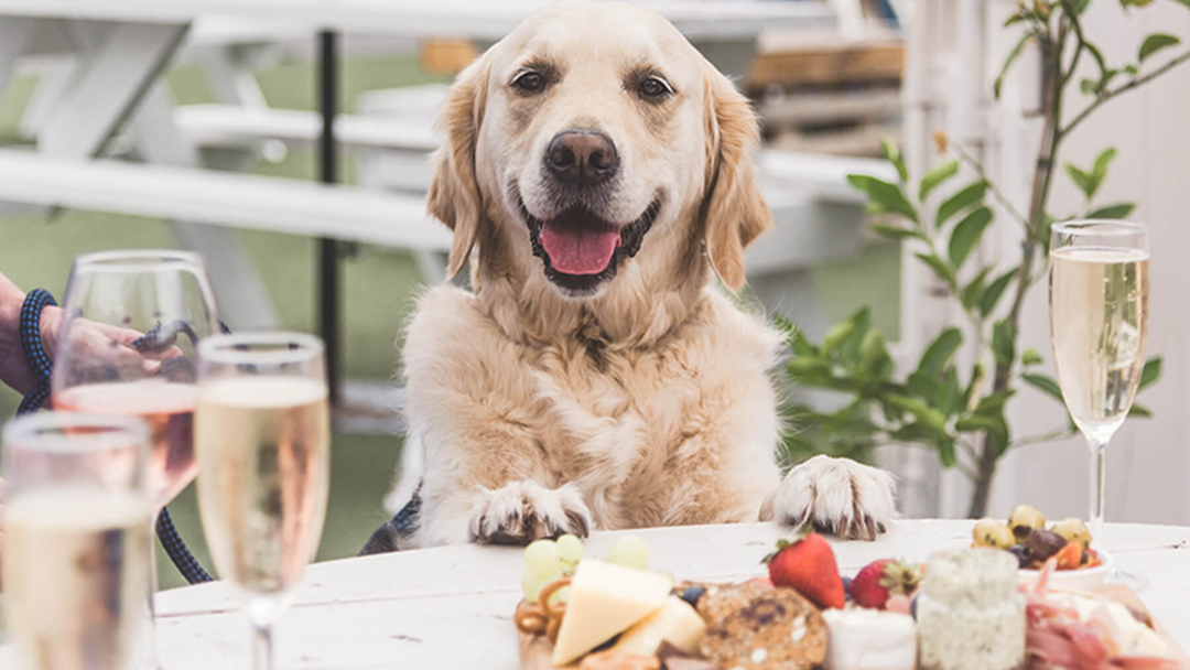 Article heading image for There Is A Festival This Weekend That Celebrates Dogs And Wine