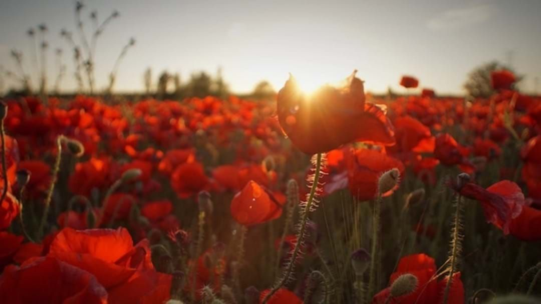 Article heading image for Here's Where You Can Pay Tribute This Anzac Day!