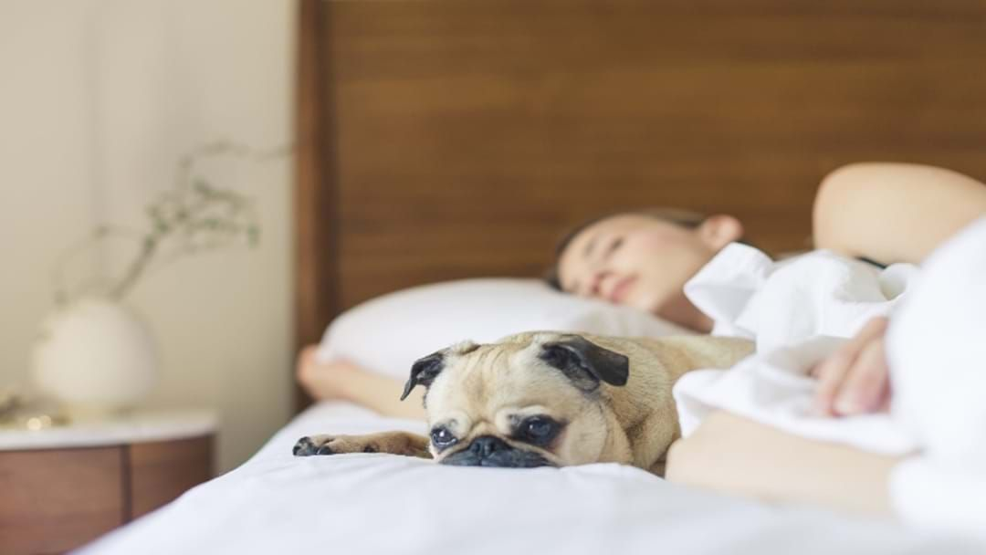 Article heading image for International Study Reveals Women Sleep Better Next To Dogs