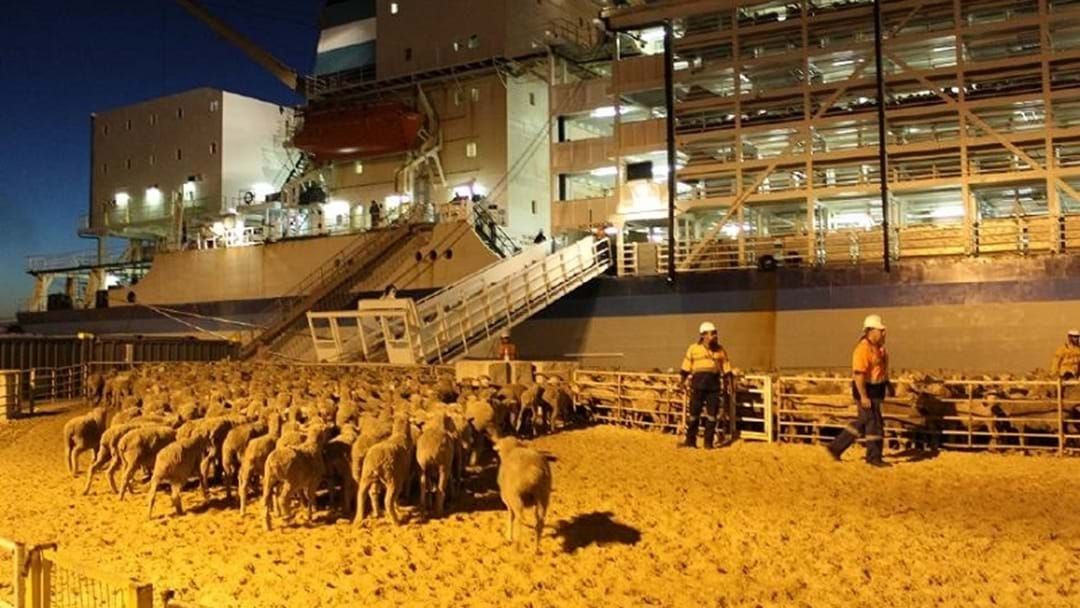 Article heading image for Sheep live export banned from Australia to the Middle East during the northern summer next year