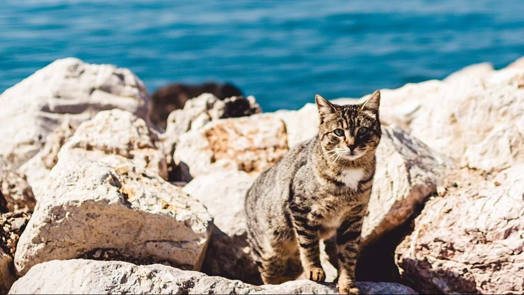 Article heading image for Did You Know That You Can Take Your Cat To St Kilda Beach?