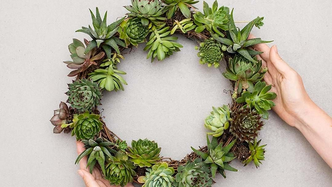 Article heading image for Succulent Wreaths Are The Only Christmas Decoration You Need This Year