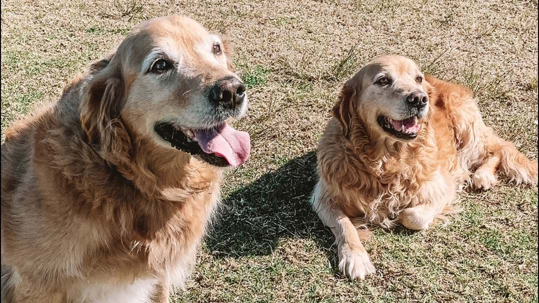 Article heading image for Long-Lost Dog Sisters Find Each Other Eight Years Later In A Sydney Park