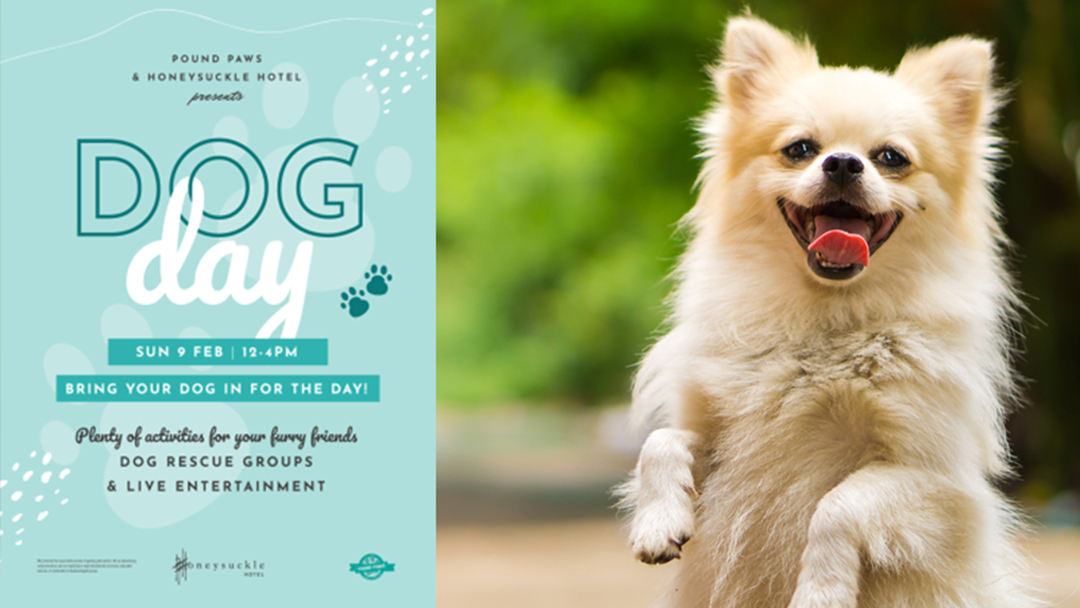 Article heading image for Honeysuckle Hotel is hosting a Dog Day and we are LOSING IT!