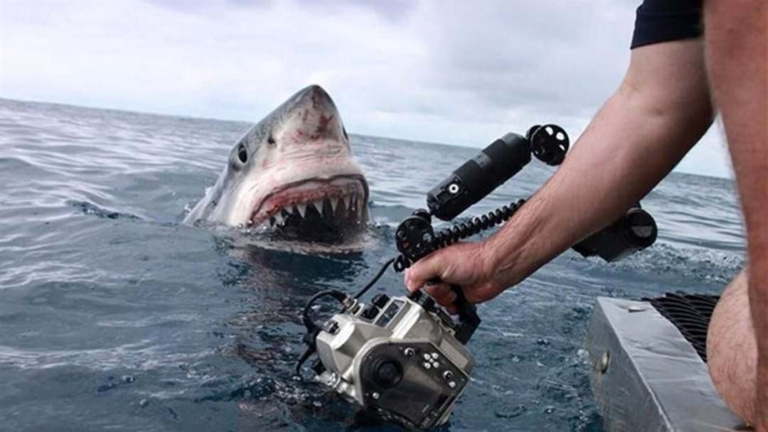 Article heading image for Personal Shark Deterrents - Have You Got Yours?