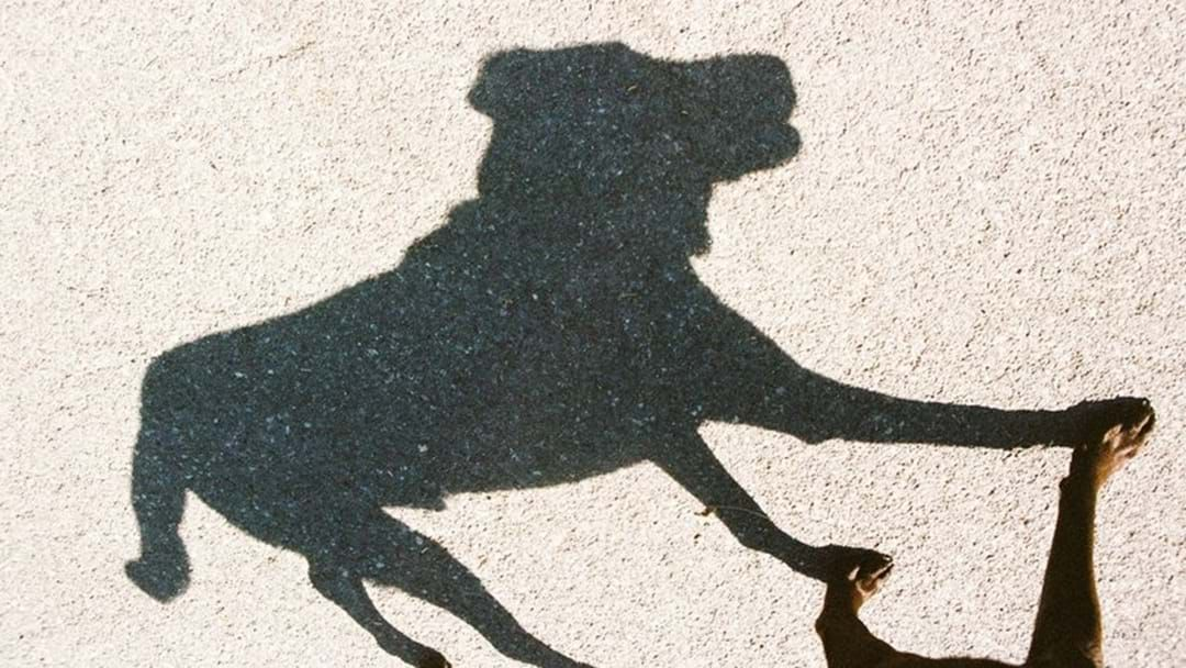 Article heading image for Council Warning Public Against Walking Dogs Up Castle Hill
