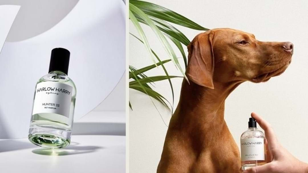 Article heading image for So Apparently Perfume For Your Doggo Is A Thing Now!