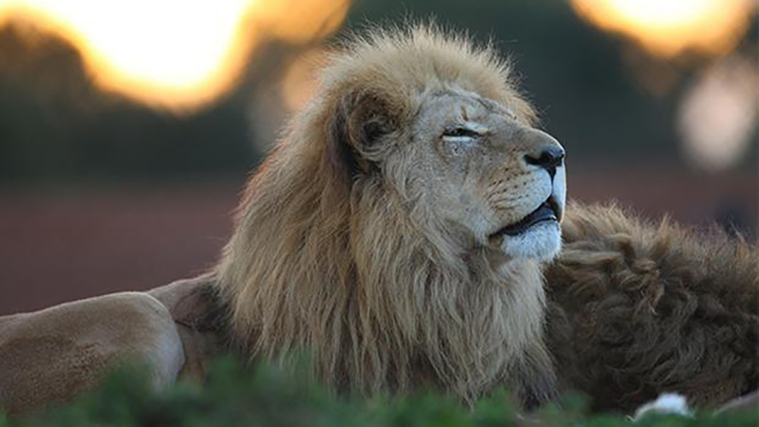 Article heading image for Forgot To Make Valentine's Day Plans? Why Not Head Out On Safari!