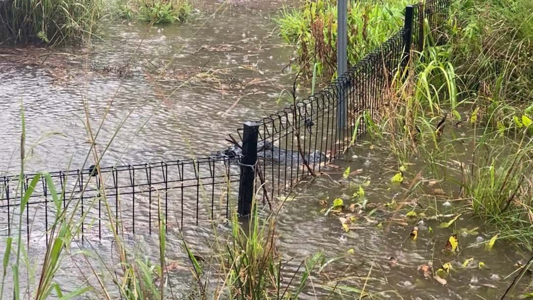 Article heading image for We're Here For The Rain But Check Out How Close This Alligator Is To Escaping At The Reptile Park
