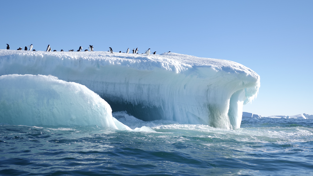 Article heading image for The Antarctica Experience Reached Final Days