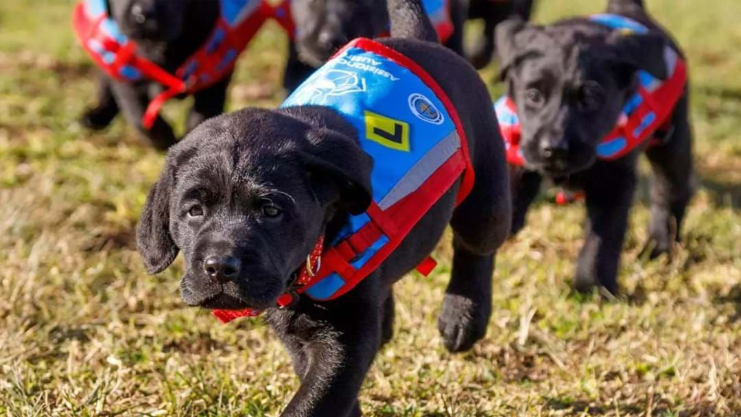 Article heading image for Sydney International Airport Has Hired A Team Of Doggos To Help Passengers Calm Down