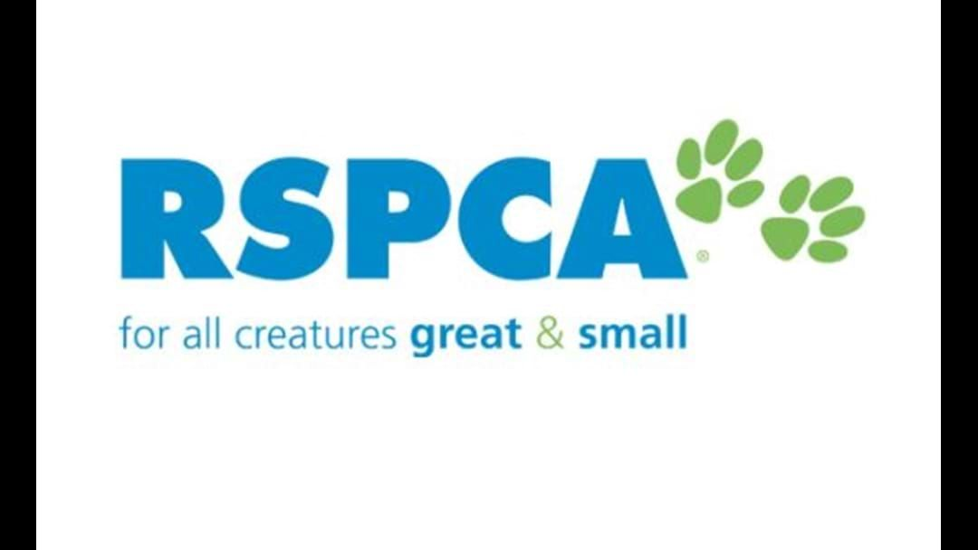 Article heading image for RSPCA WA'S Warning For Dog Owners