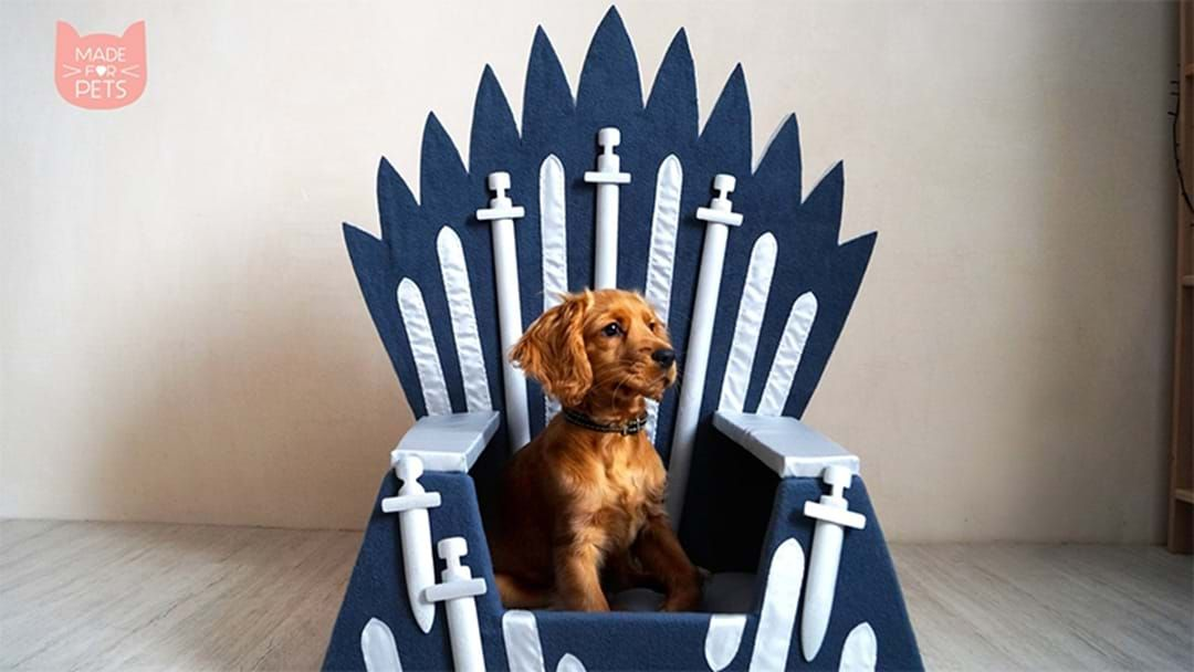 Article heading image for Your Pet Definitely Needs This Game Of Thrones Chair