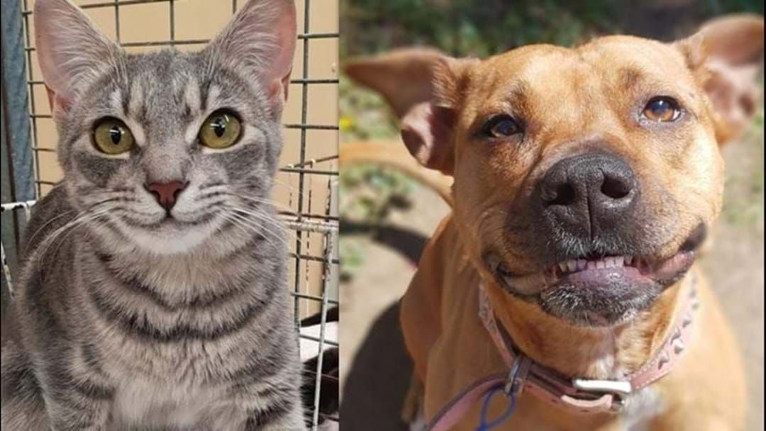 Article heading image for Time To Meet Your New Mate: RSPCA Running $29 Adoptions This Weekend