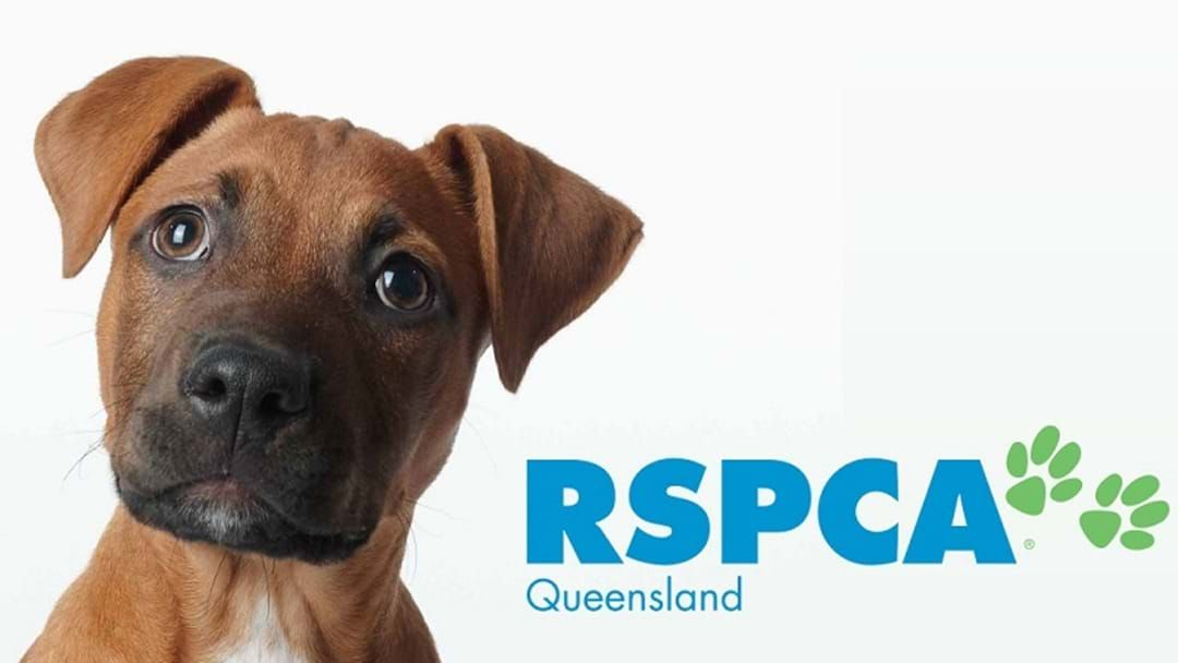 Article heading image for RSPCA is Finally Reopening!