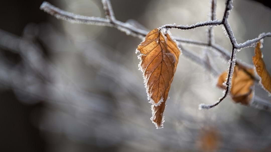 Article heading image for The First Autumn Frost Forcast Tonight
